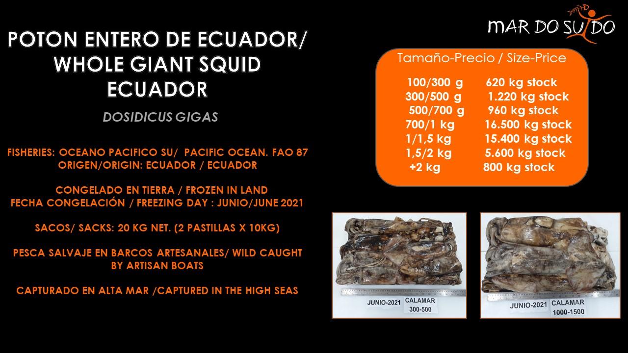 Oferta Destacada de Potón Entero de Ecuador -  Whole Giant Squid Ecuador Offer