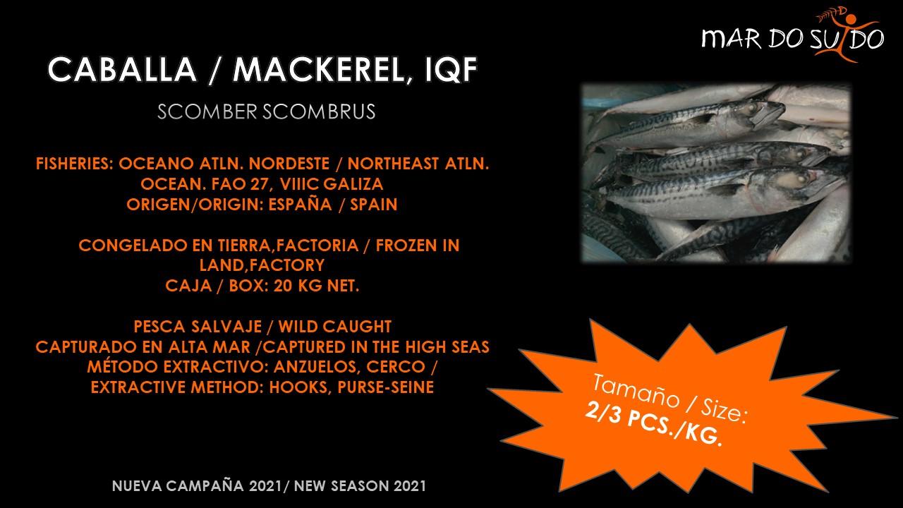 Oferta Destacada de Caballa IQF - Mackerel Special Offer, Size 2-3 pcs/kg