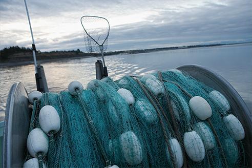 Akkoord over 2016 visquota levert goed resultaat voor Nederland Nieuwsbericht