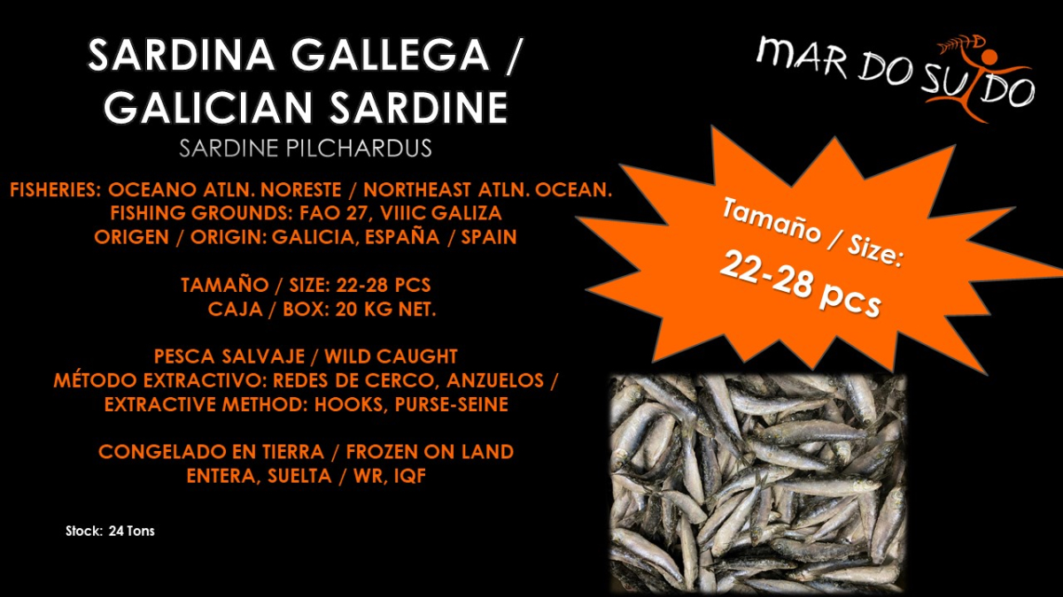 Oferta Destacada de Sardina Gallega- Galician Sardine Special Offer