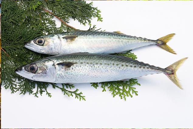 DIETA E NUTRIZIONE Nutrizionista_pesce_spadaIl pesce spada (Xiphias Gladius) trova il suo habitat migliore nei mari temperati come il Mar Mediterraneo