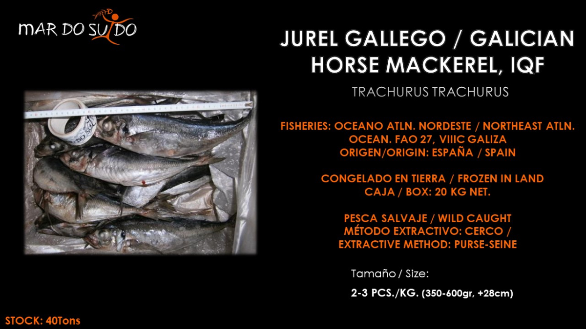Oferta Especial de Jurel Gallego - Galician Horse Mackerel Special Offer