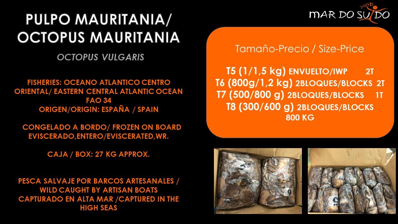 Oferta Destacada de Pulpo Mauritania- Octopus Mauritania Special Offer