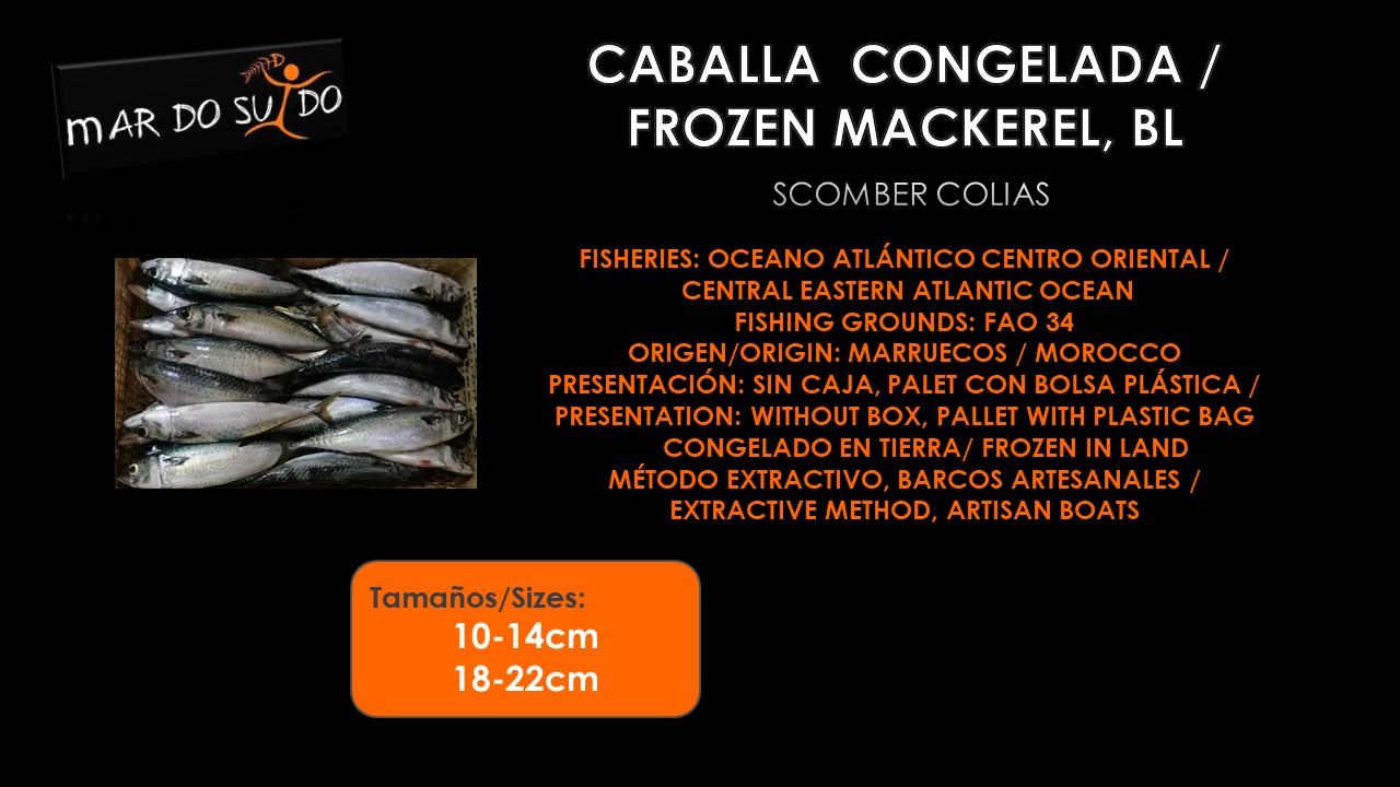 Oferta Destacada de Caballa, IQF - Mackerel Special Offer