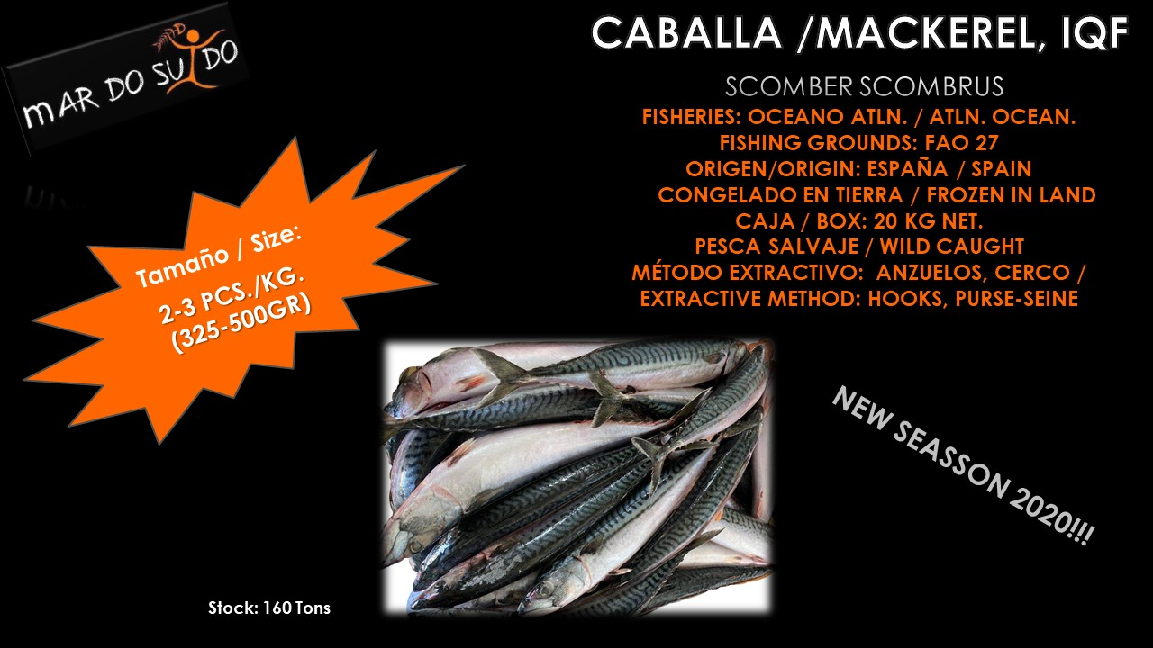 Oferta Destacada de Caballa - Mackerel Special Offer, Size 2-3 pcs/kg