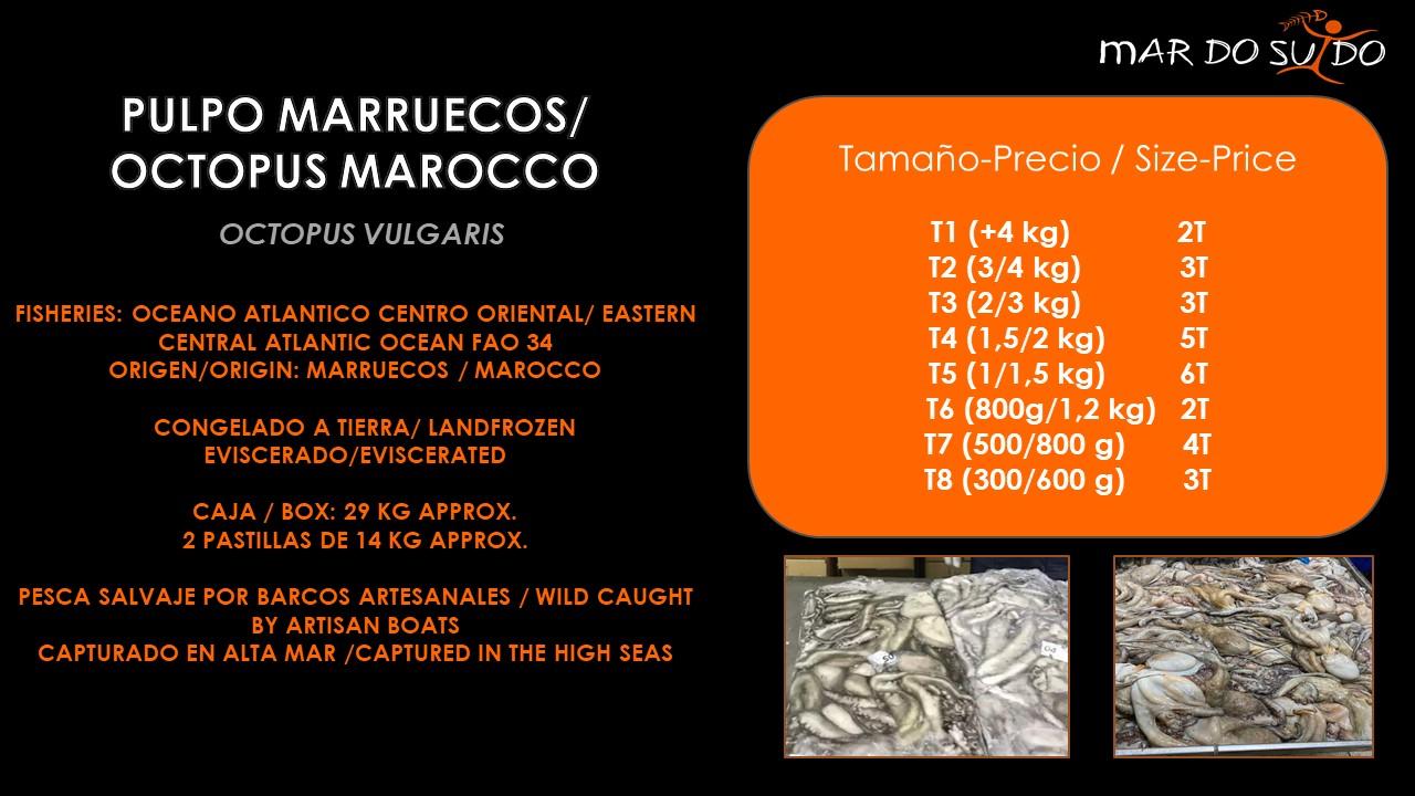 Oferta Destacada de Pulpo Marruecos - Octopus Marocco Special Offer