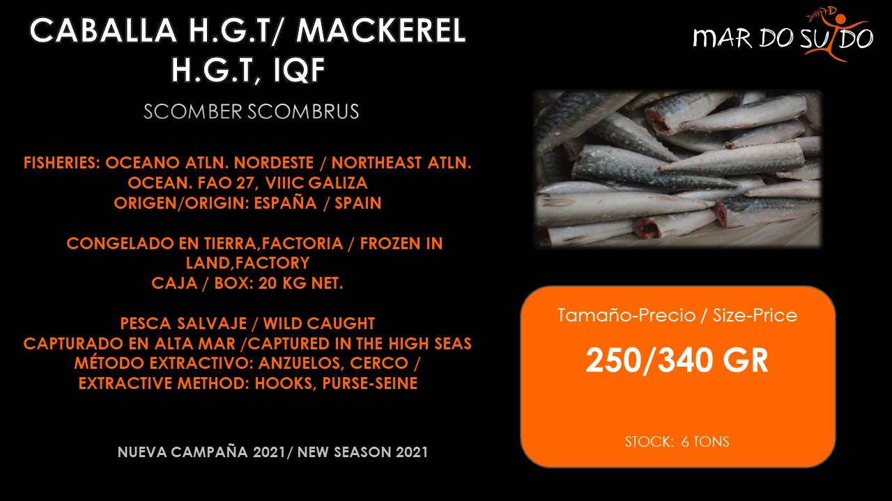 Oferta Destacada de Caballa H.GT., IQF - Mackerel Special Offer, Size 250/340 pcs/kg