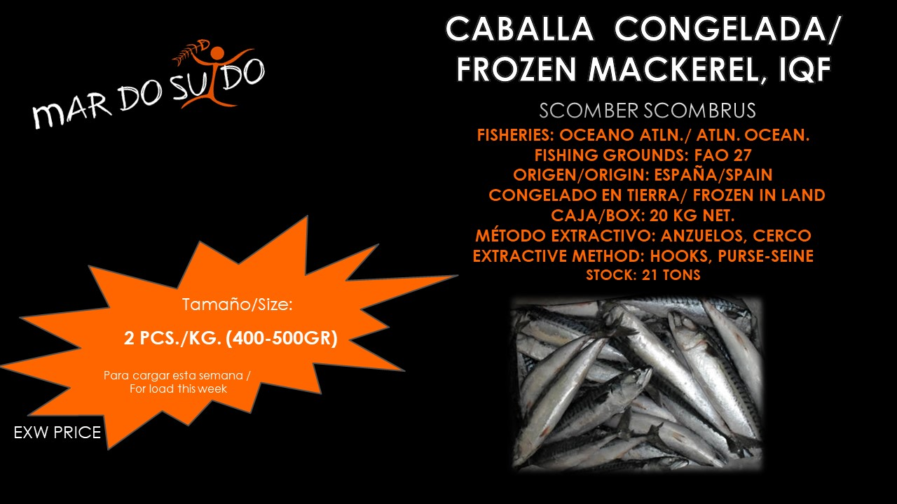 Oferta Destacada de Caballa - Mackerel Special Offer, Size 2pcs/kg
