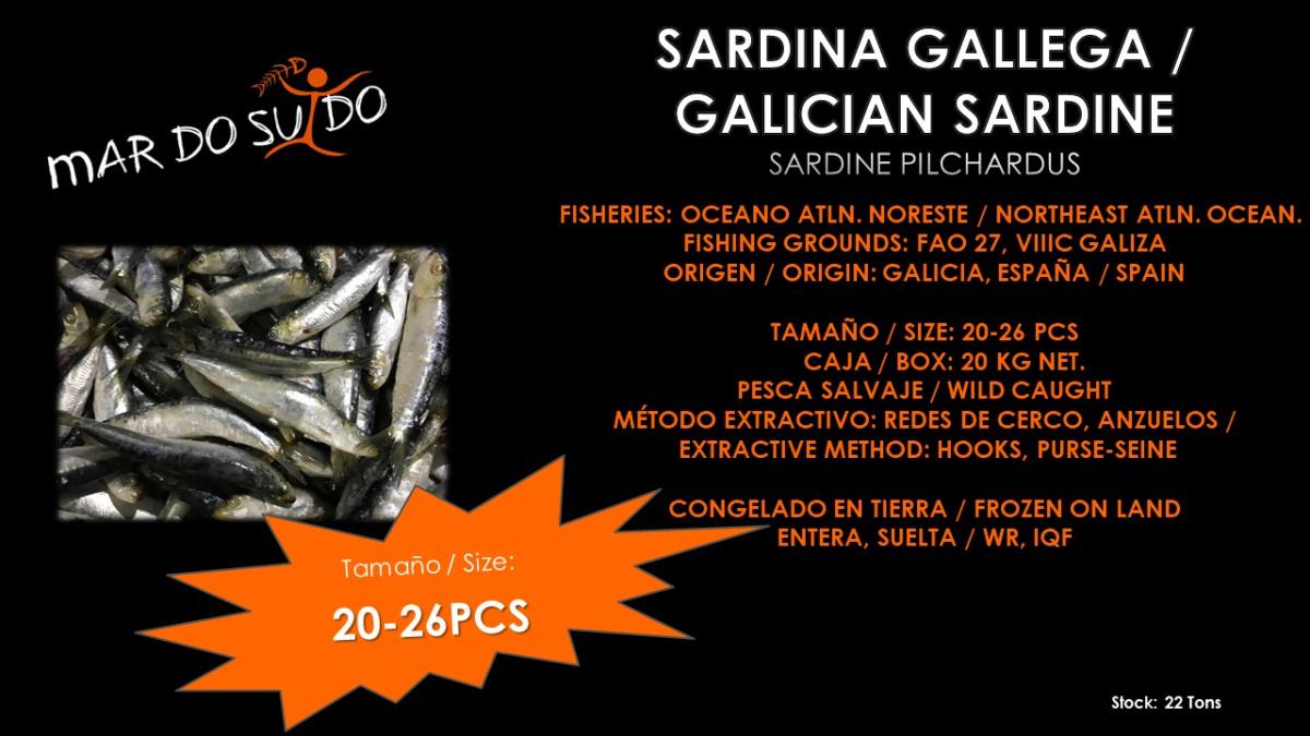 Oferta Destacada de Sardina - Sardine Special Offer