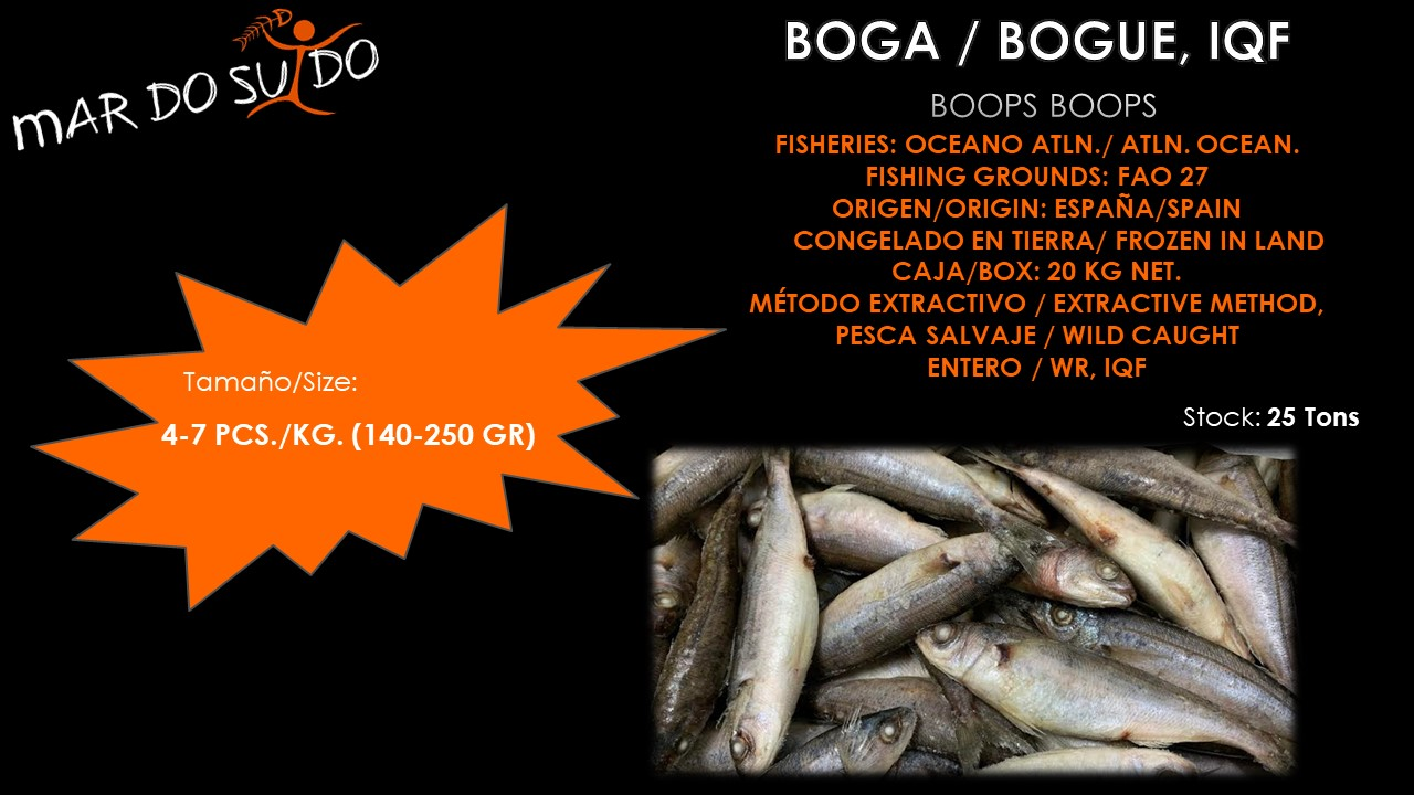 Oferta Destacada de Boga - Bogue Special Offer